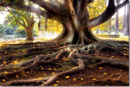 根をおろす。
